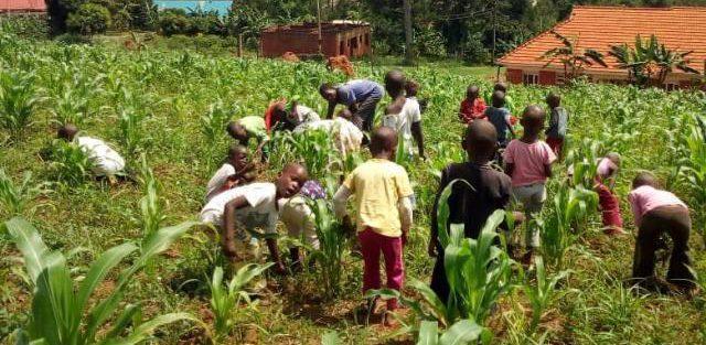 Kampala, Uganda CPC farm